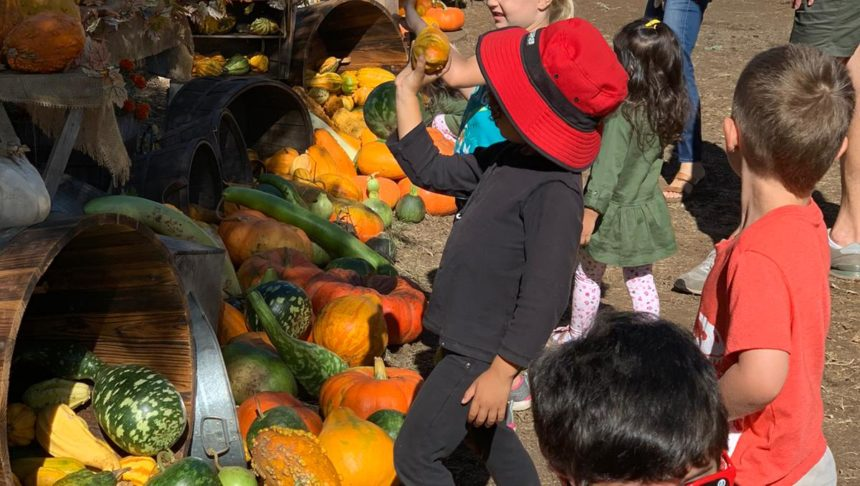 Little Hoku students at the pumpkin patch