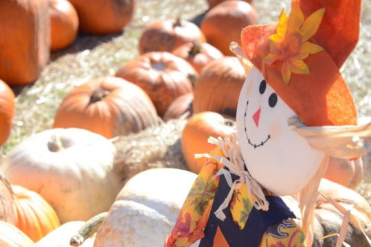 Image of a scarecrow and pumpkins
